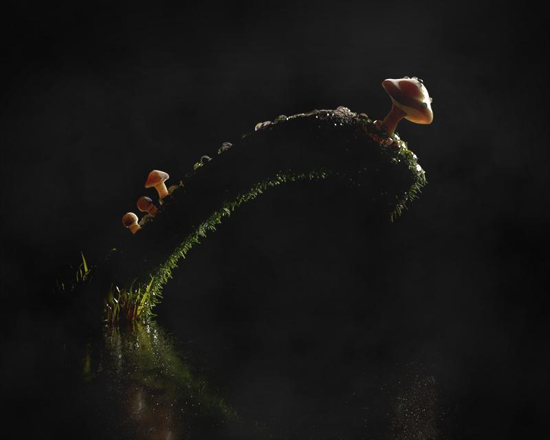 http://boucard.laurent.free.fr/images/champ2.jpg