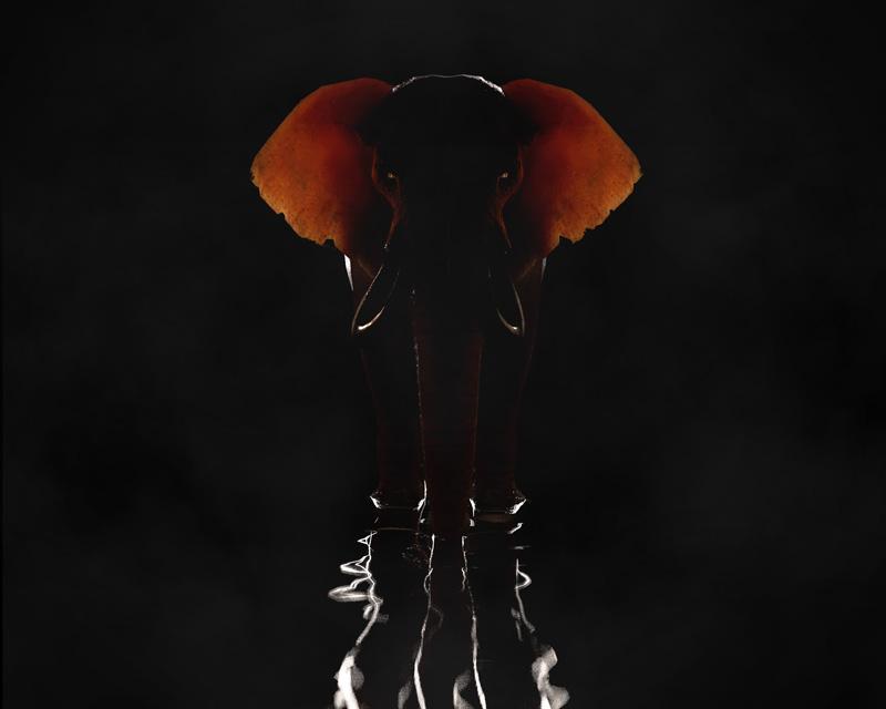 http://boucard.laurent.free.fr/images/elephant.jpg