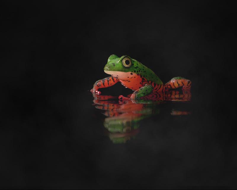 http://boucard.laurent.free.fr/images/frog.jpg