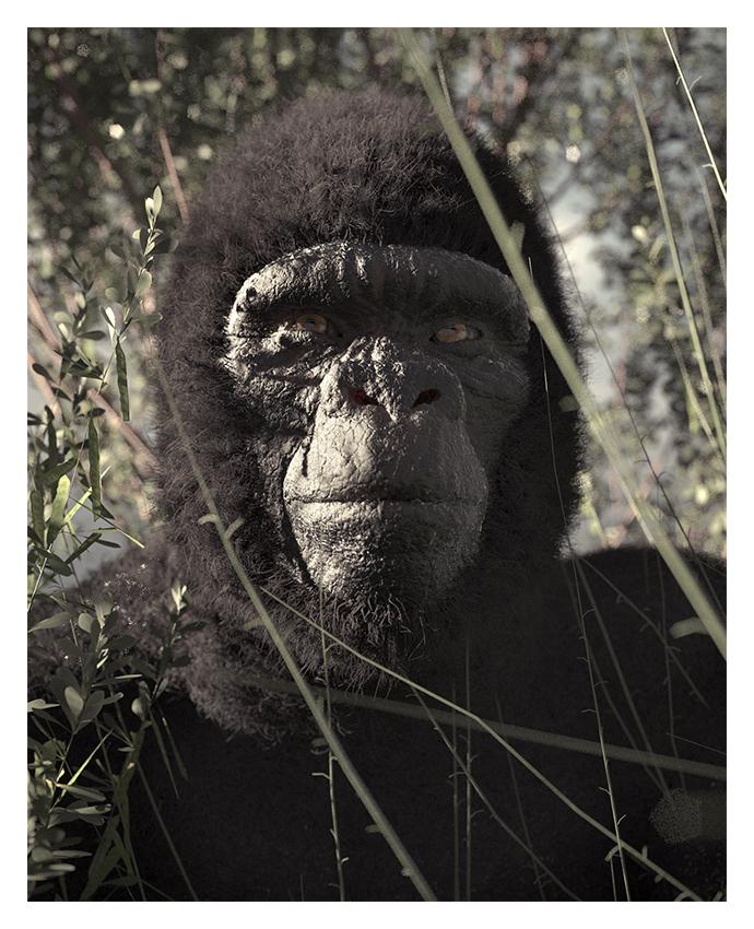 http://boucard.laurent.free.fr/images/gorille.jpg