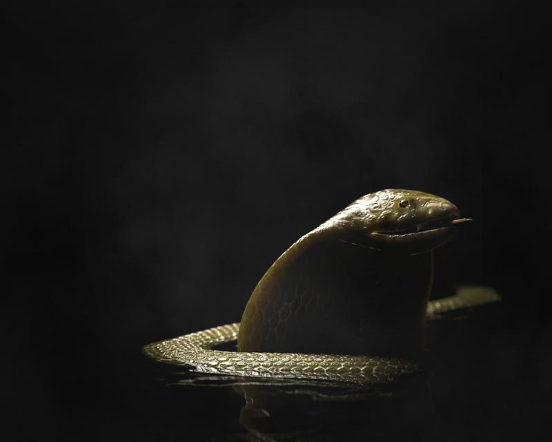 http://boucard.laurent.free.fr/images/snake3.jpg