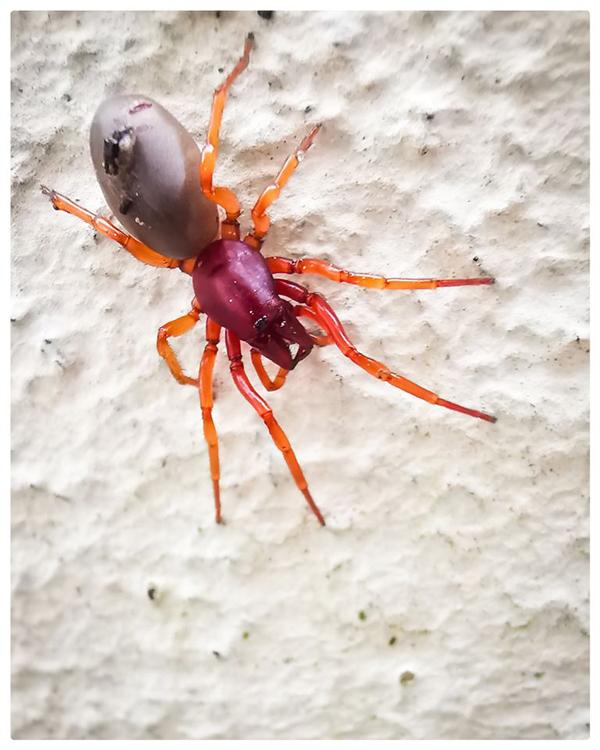 http://boucard.laurent.free.fr/images/spider.jpg